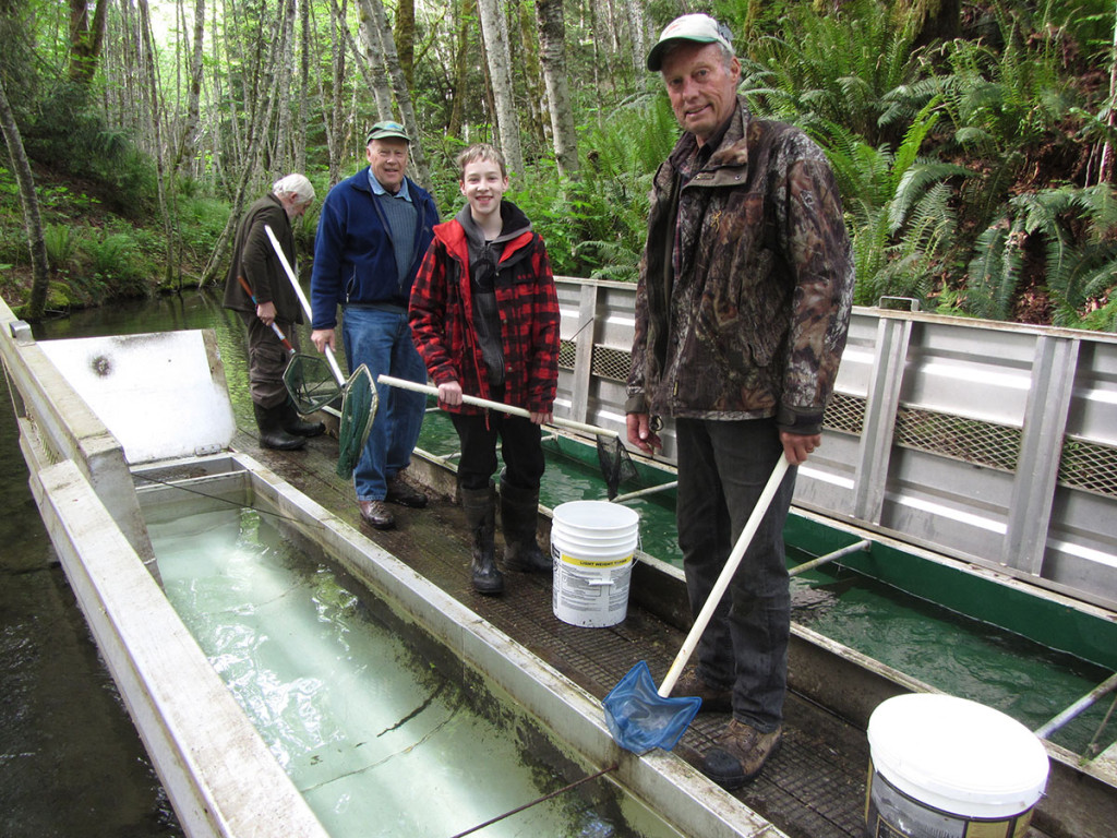 Austin Waskul moving coho fry at Oyster River.