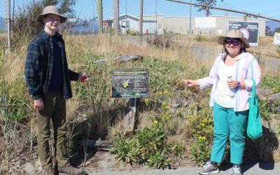 Goose Spit Park Yellow Sand-verbena Inventory 2020